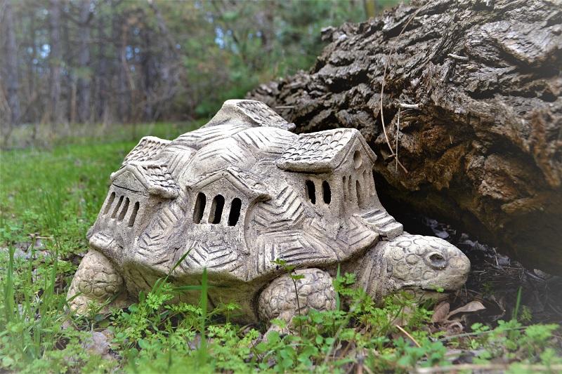 черепаха с домом
