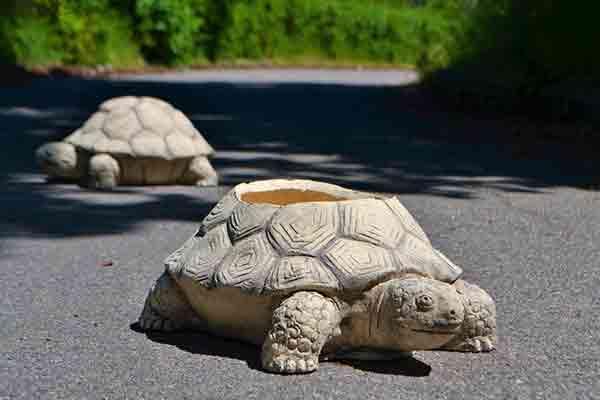 Горшок Черепаха