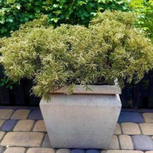 Горшок для хвойных растений Тристан №1