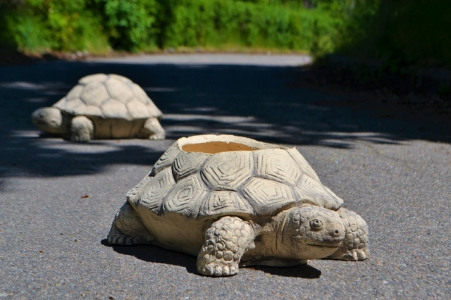Кашпо черепаха