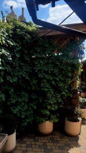 Горшок для вьющихся растений Айна